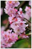 2013.02.06_大溪果園-尼康篇:2013.02.06_大溪果園-Nikon-0021.jpg