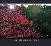 2013.01.26_鳥嘴山賞花趣:2013.01.26_鳥嘴山賞花趣_0001.jpg