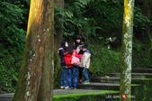 2014.04.05_溪頭遊記-風景篇:2014.04.05_溪頭遊記-風景篇0017.jpg