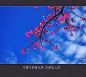 2013.02.01_山櫻花之戀:2013.02.01_山櫻花之戀-0001.jpg