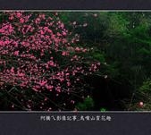 2013.01.26_鳥嘴山賞花趣:2013.01.26_鳥嘴山賞花趣_0002.jpg