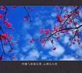 2013.02.01_山櫻花之戀:2013.02.01_山櫻花之戀-0002.jpg
