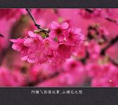 2013.02.01_山櫻花之戀:2013.02.01_山櫻花之戀-0019.jpg