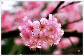 2013.02.06_大溪果園-尼康篇:2013.02.06_大溪果園-Nikon-0013.jpg