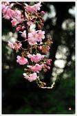2013.02.06_大溪果園-尼康篇:2013.02.06_大溪果園-Nikon-0022.jpg