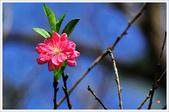 2013.02.06_大溪果園-尼康篇:2013.02.06_大溪果園-Nikon-0002.jpg