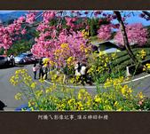 2013.02.14_嘉義頂石棹昭和櫻:2013.02.20_頂石棹昭和櫻-0006.jpg