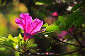 2014.04.05_溪頭遊記-風景篇:2014.04.05_溪頭遊記-風景篇0020.jpg