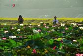 2014.08.31_大溪濕地晨荷:2014.08.31_大溪濕地0017.jpg