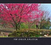 2013.01.26_鳥嘴山賞花趣:2013.01.26_鳥嘴山賞花趣_0005.jpg