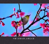 2013.02.01_山櫻花之戀:2013.02.01_山櫻花之戀-0007.jpg