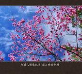 2013.02.14_嘉義頂石棹昭和櫻:2013.02.20_頂石棹昭和櫻-0007.jpg