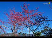 2009.01.29_南橫風采:2009.01.29_南橫風采-01.jpg