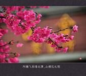 2013.02.01_山櫻花之戀:2013.02.01_山櫻花之戀-0021.jpg