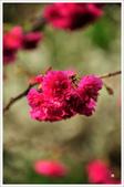 2013.02.06_大溪果園-尼康篇:2013.02.06_大溪果園-Nikon-0023.jpg