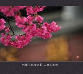 2013.02.01_山櫻花之戀:2013.02.01_山櫻花之戀-0022.jpg