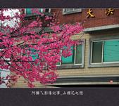 2013.02.01_山櫻花之戀:2013.02.01_山櫻花之戀-0023.jpg