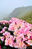 2012.06.06_百岳合歡山主峰賞花行:DSC_1240.JPG