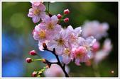 2013.02.06_大溪果園-尼康篇:2013.02.06_大溪果園-Nikon-0003.jpg