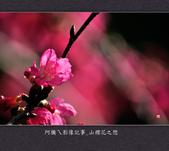 2013.02.01_山櫻花之戀:2013.02.01_山櫻花之戀-0012.jpg