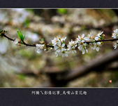 2013.01.26_鳥嘴山賞花趣:2013.01.26_鳥嘴山賞花趣_0008.jpg