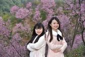 2015.02.19_熊空櫻花林外拍-合照:2015.02.19_熊空櫻花林外拍0007.jpg