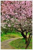 2013.02.06_大溪果園-尼康篇:2013.02.06_大溪果園-Nikon-0024.jpg