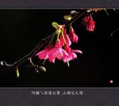 2013.02.01_山櫻花之戀:2013.02.01_山櫻花之戀-0014.jpg