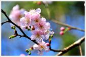 2013.02.06_大溪果園-尼康篇:2013.02.06_大溪果園-Nikon-0004.jpg