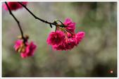 2013.02.06_大溪果園-尼康篇:2013.02.06_大溪果園-Nikon-0015.jpg