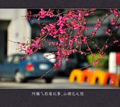 2013.02.01_山櫻花之戀:2013.02.01_山櫻花之戀-0017.jpg