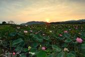 2014.08.29_大溪濕地荷池晨彩:2014.08.29_大溪濕地-晨荷0011.jpg