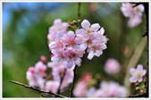 2013.02.06_大溪果園-尼康篇:2013.02.06_大溪果園-Nikon-0005.jpg