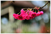 2013.02.06_大溪果園-尼康篇:2013.02.06_大溪果園-Nikon-0016.jpg