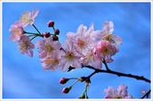 2013.02.06_大溪果園-尼康篇:2013.02.06_大溪果園-Nikon-0006.jpg