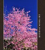 2013.02.14_嘉義頂石棹昭和櫻:2013.02.20_頂石棹昭和櫻-0012.jpg