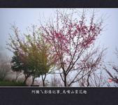 2013.01.26_鳥嘴山賞花趣:2013.01.26_鳥嘴山賞花趣_0017.jpg