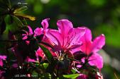 2014.04.05_溪頭遊記-風景篇:2014.04.05_溪頭遊記-風景篇0002.jpg