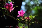 2014.04.05_溪頭遊記-風景篇:2014.04.05_溪頭遊記-風景篇0003.jpg