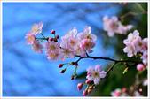 2013.02.06_大溪果園-尼康篇:2013.02.06_大溪果園-Nikon-0007.jpg