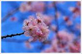 2013.02.06_大溪果園-尼康篇:2013.02.06_大溪果園-Nikon-0008.jpg