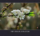 2013.01.26_鳥嘴山賞花趣:2013.01.26_鳥嘴山賞花趣_0021.jpg