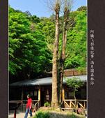 2013.03.23_滿月園森林浴:2013.03.23_滿月園森林浴-0006.jpg