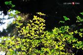 2014.04.05_溪頭遊記-風景篇:2014.04.05_溪頭遊記-風景篇0006.jpg