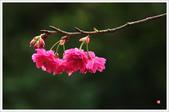 2013.02.06_大溪果園-尼康篇:2013.02.06_大溪果園-Nikon-0018.jpg