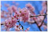 2013.02.06_大溪果園-尼康篇:2013.02.06_大溪果園-Nikon-0009.jpg