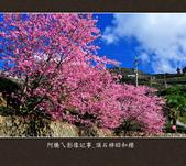 2013.02.14_嘉義頂石棹昭和櫻:2013.02.20_頂石棹昭和櫻-0001.jpg