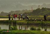 2014.09.03_濕地之晨:2014.09.03_大溪濕地之晨0013.jpg