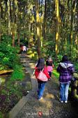 2014.04.05_溪頭遊記-風景篇:2014.04.05_溪頭遊記-風景篇0008.jpg