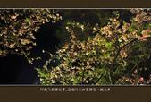 2013.03.16_悠遊阿里山-夜櫻車軌篇:2013.03.16_阿里山-夜櫻車軌篇0015.jpg